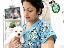 Cachorros WEST HIGHLAND TERRIER , WESTY en PET VITAL
