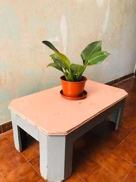 Mesa de madera maciza laqueada