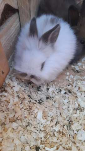 Vendo hermosos conejos