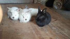Conejos en venta