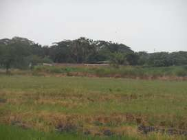 Venta Terrenos en Lotización El Buijo, en Samborondon
