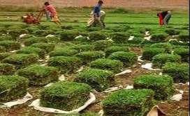 VENTA DE GRAS NATURAL PARA EMPRESAS -HYO