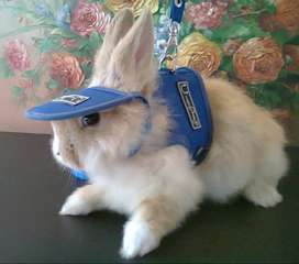 Arnés y Pecheras Para Conejos en Bogotá y envíos Nacionales