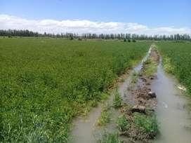 Venta chacra 25 hectareas