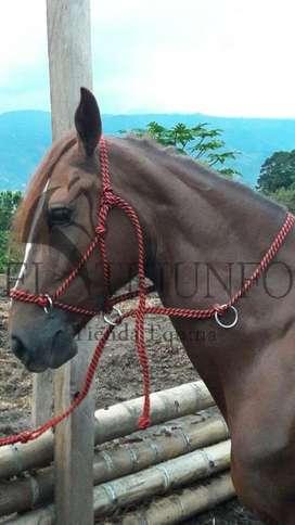 Jaquimon Corrector, HORSE HALTER.