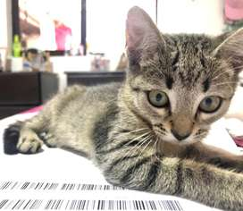 Adopta hermosa gatica