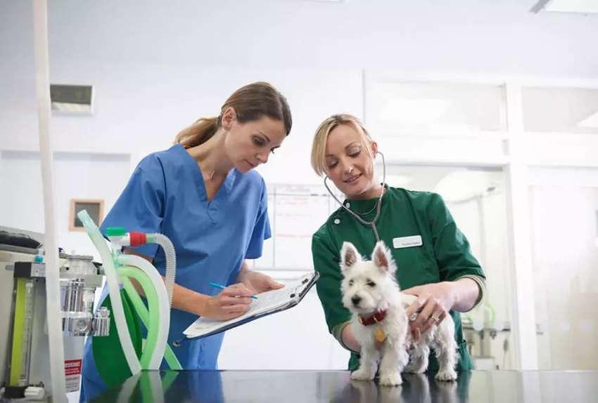Se solicita médico veterinario 0