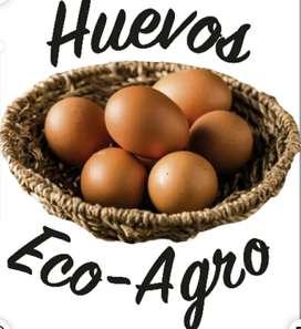 Huevos eco- agro