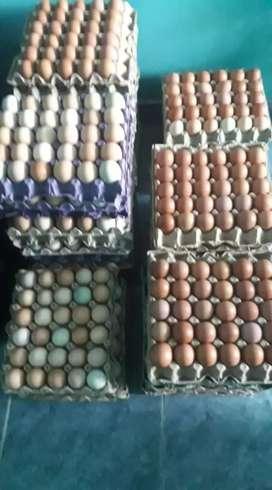 Venta de Huevos Campesinos