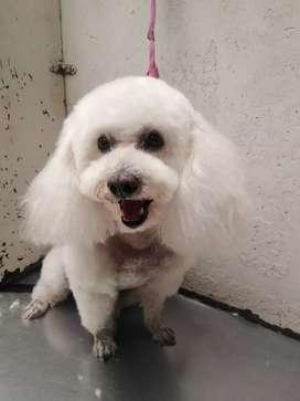 Curso básico de peluquería canina