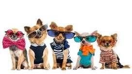 Guarderia pequeñas para Perros en 3 de Febrero para razas pequeñas