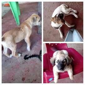 Se da en adopción 3 cachorritas de 3 meses