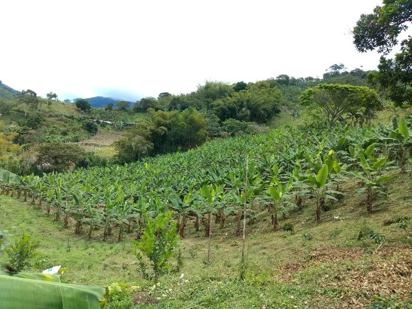 Vendo finca con un hermosa vista casa en materia cultivos de café plátano y limón tahití todo nuevo