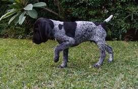 Cachorro 3 meses