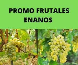 promociones de frutales enanos