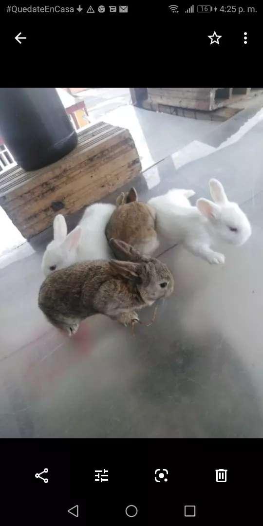 Conejos Bebes, Un Buen Detalle