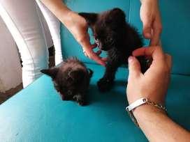 Gatos bebés en adopción