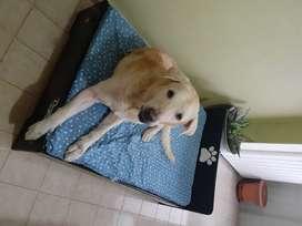 Cama para perro accesorio