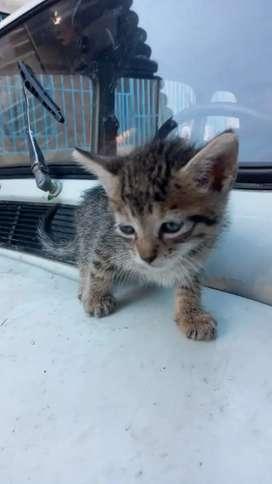Adopcion gato