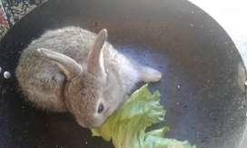 Vendo conejos..