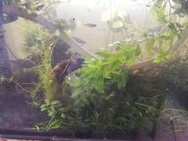 Plantas para acuarios