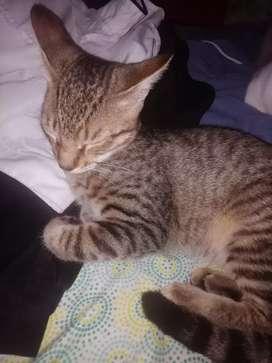 Se da en adopción lindos gatitos