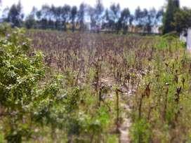 Venta de 8 hectáreas de terreno en Calderón