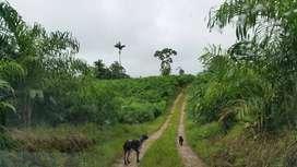 VENDO FINCA AGRICOLA 84 Ha. PEDRO V. MALDONADO