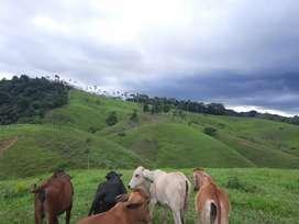 60 hectáreas en Pueblo Nuevo-Remedios