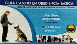 Adiestramiento canino en obediencia básica personalizado