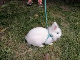 Arnes para conejos