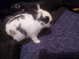 Pequeños bebés conejos.