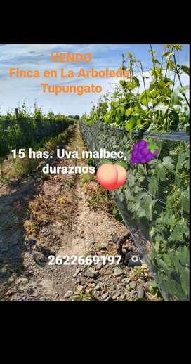 VENDO Finca en La Arboleda Tupungato