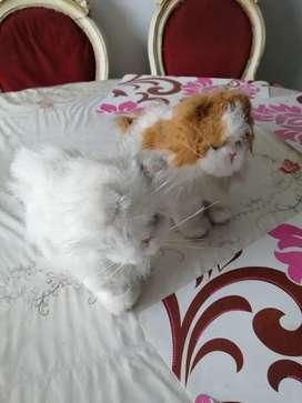 Dos gatos de pelu he antiguos hasbro