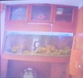 Fabricación de acuarios com luces Leds y mantenimiento de peceras