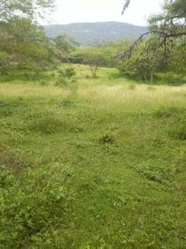 Vendo finca de 105 hectáreas en el socorro Santander