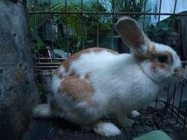 Hermosos conejos