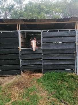 Vendo caballos y alquilo pesebreras