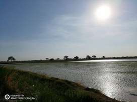 Terreno agrícola de 59 hectáreas ubicado en el distrito de Túcume
