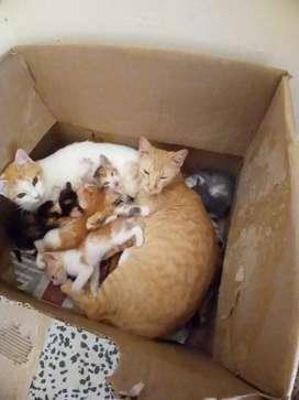 Estoy dando en adopcion unos gaticos.