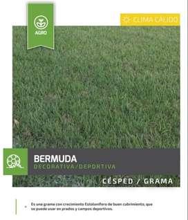 Semillas de Pasto Bermuda Clima Cálido 500 Gramos
