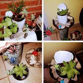Plantitas y suculentas