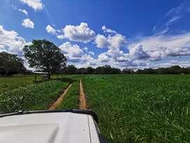 Hermosa finca ganadera de 400 hectáreas toda hecha... Excelente tierra