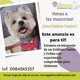Estamos en búsqueda de un Estilista Canino con experiencia