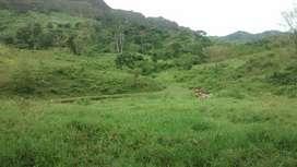 Vendo finca ganadera de  10 hectareas, buenos pastos.