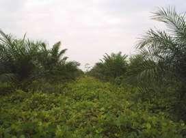 Finca en Villanueva, Casanare