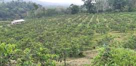 Busco Socio para cultivo