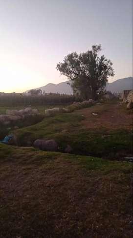 Venta de terreno en Amein