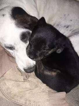 Adopción perrita
