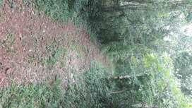 Vendo 12 hectares en el Soberbio.